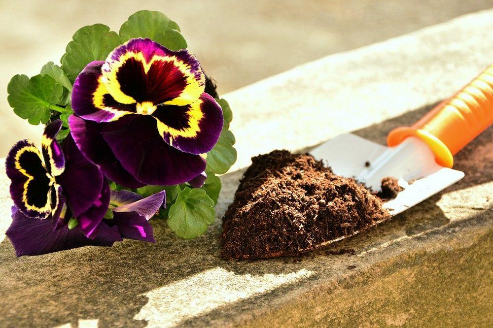 Een lenteschoonmaak voor jouw tui