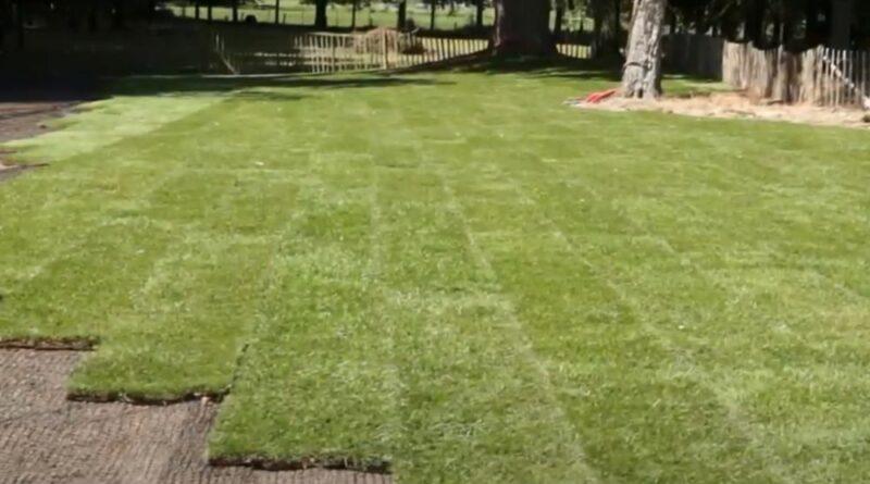 Een lenteschoonmaak voor jouw tuin